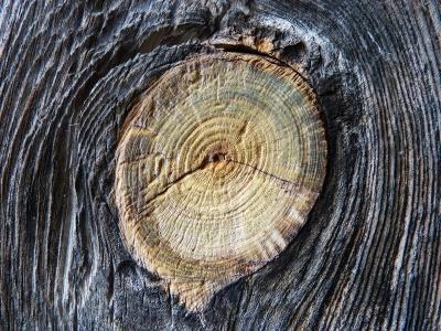 old-wood-1093261_400x300