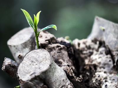 grow-781769_400x300
